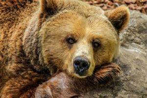 Bärenglocke für mehr Sicherheit