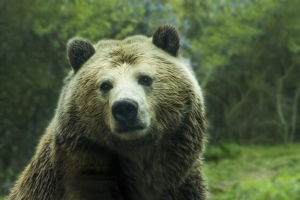 Was ist ein Bärenspray?
